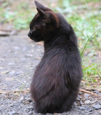 【小説】黒猫という名の罪 - 占い
